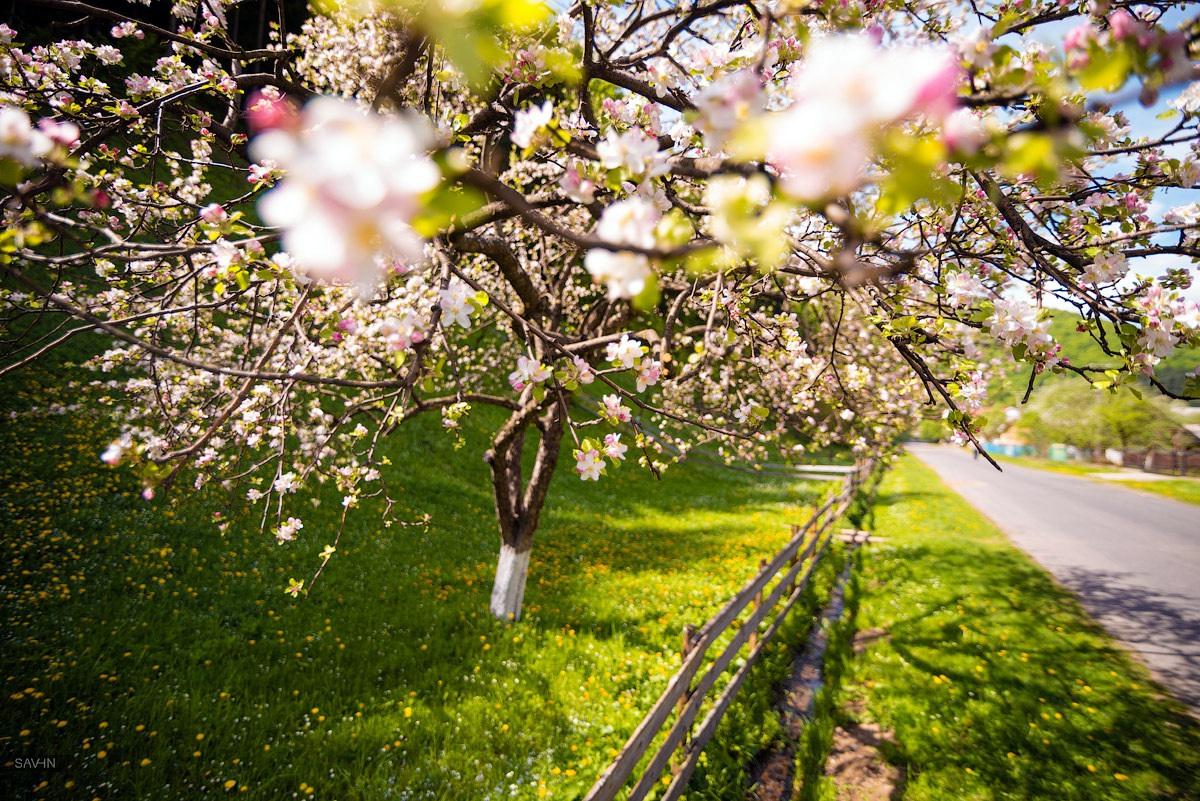 spring ukraine
